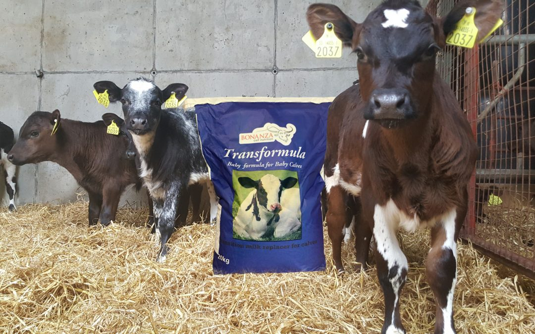 Transformula – the only transition milk replacer for baby calves
