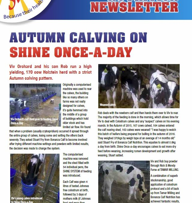 Shine newsletter – Issue 8