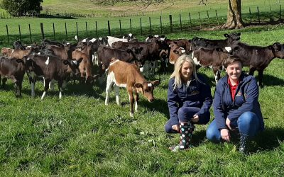 Back to basics with calf rearing in New Zealand