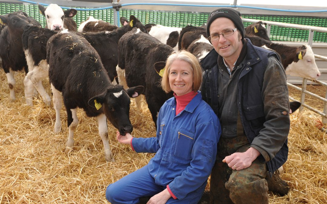 Heifers hit 23-month calving target on two-tier calf milk replacer system after colostrum