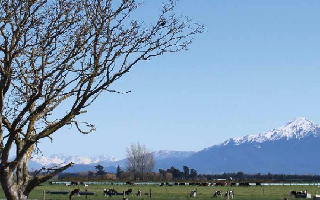 Calf Nutrition New Zealand