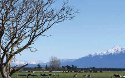 Calf Nutrition New Zealand