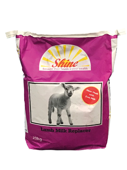 Shine-Lamb-FreeFlow